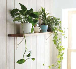 棚板/糸面 樹種を豊富にご用意しているので、お部屋の雰囲気に合わせて選ぶことができます。 また、サイズオーダーも可能なので、お好きな場所にレイアウトが可能です。